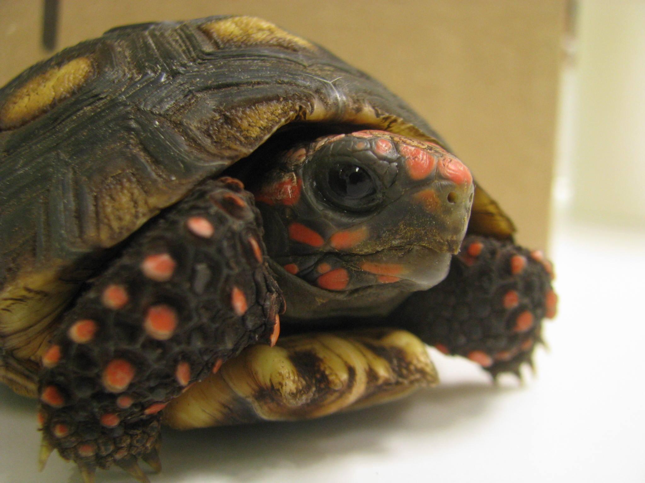Calgary Avian & Exotic Pet Clinic - Tortoise Care