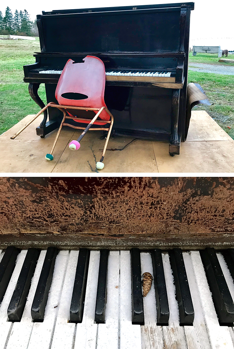 Walkabout:  Whale Cove Piano