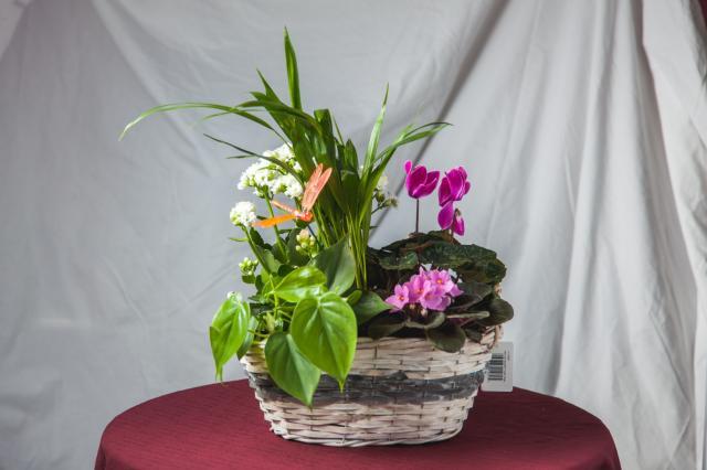 https://0901.nccdn.net/4_2/000/000/051/72c/lcp-planters-sept17-2020-2858.jpg