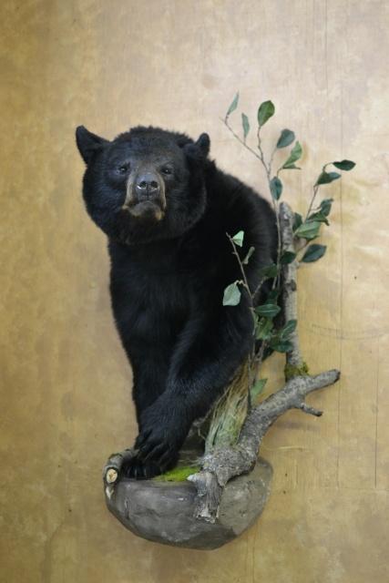 https://0901.nccdn.net/4_2/000/000/053/0e8/Animal-2014-Wildlife-O-6--3--427x640.jpg