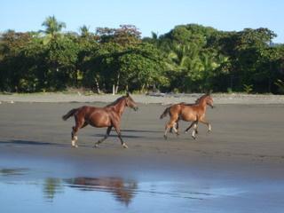 https://0901.nccdn.net/4_2/000/000/056/7dc/Costa_Rica-_Matepalo-_2009_145-320x240.jpg