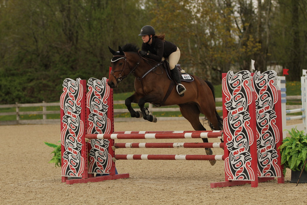 """""""Cazador"""" is a 2011, 16.1 Warmblood gelding. He's competed in both the hunters and the 0.9  jumpers with room to move up, he would also make a great equitation horse. He is perfect for  a junior/amateur and excels in a training program, and has a great attitude under saddle.  Cazador loves the show ring and works hard to please his rider.   For more info please contact Laura Kinvig at laura@wecreateriders.com"""