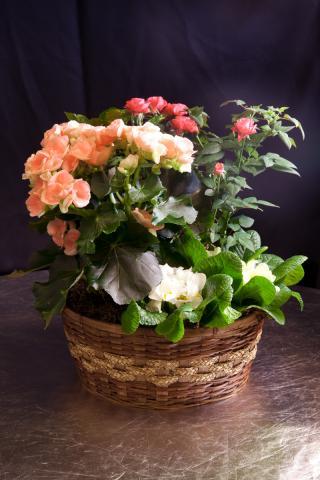 https://0901.nccdn.net/4_2/000/000/056/7dc/planter-basket-port-alberni-5.jpg