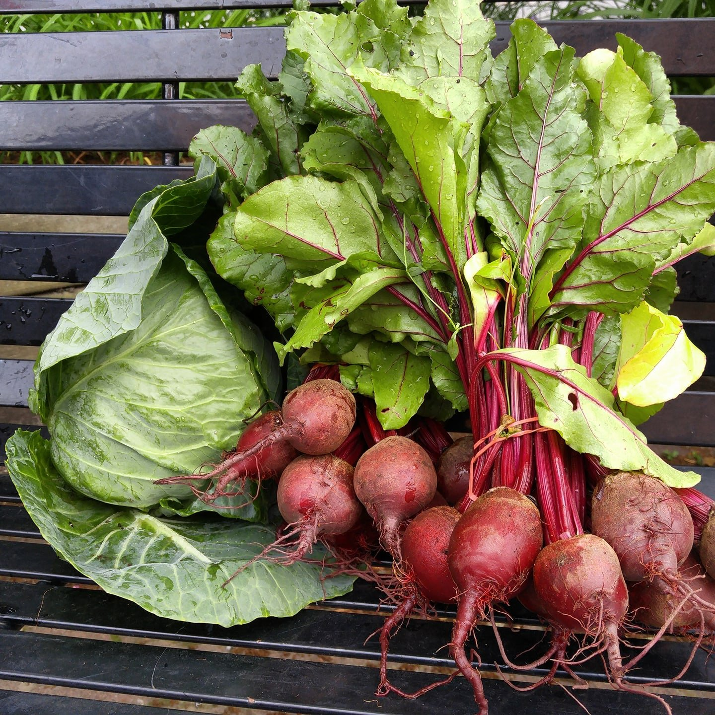 https://0901.nccdn.net/4_2/000/000/05c/c64/radish-cabbage.jpg