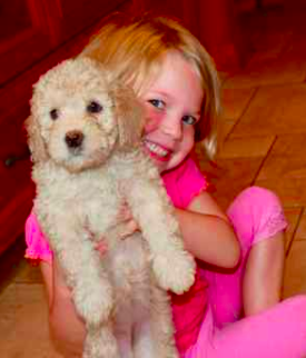 C litter puppy