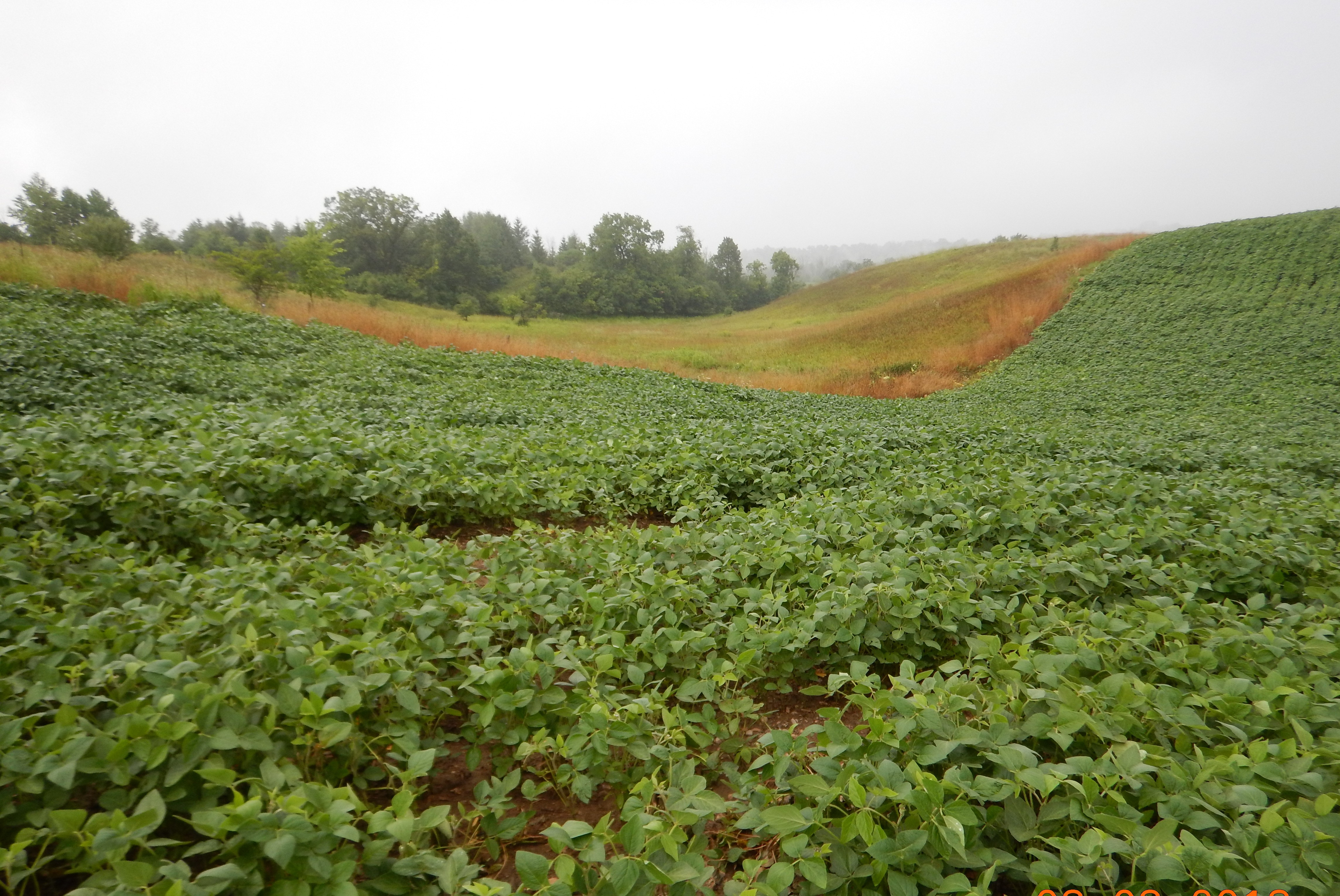 Common field crop production on steeply sloping lands.