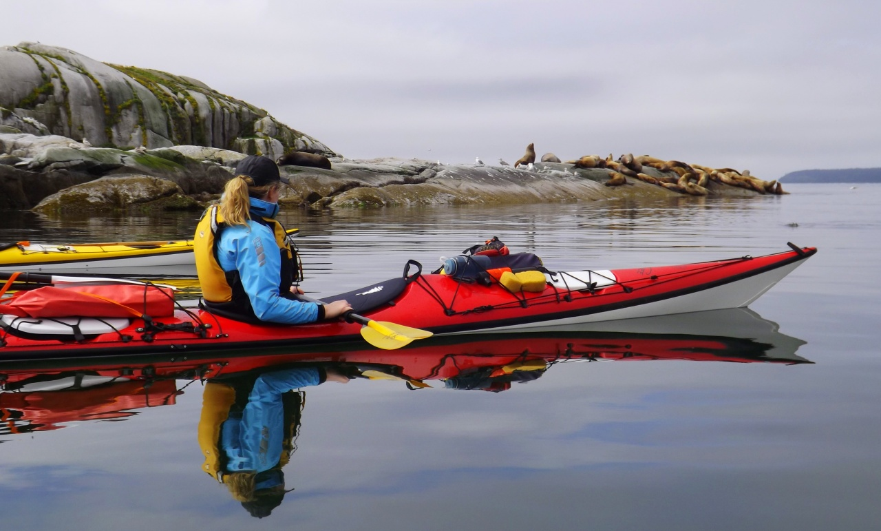 Day kayak tour viewing sea life in Lund BC