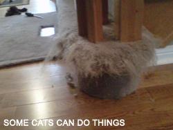 https://0901.nccdn.net/4_2/000/000/064/d40/Some-cats-can-do-things-250x188.jpg
