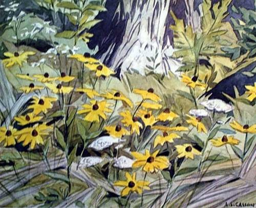 Black eyed Susans sold out