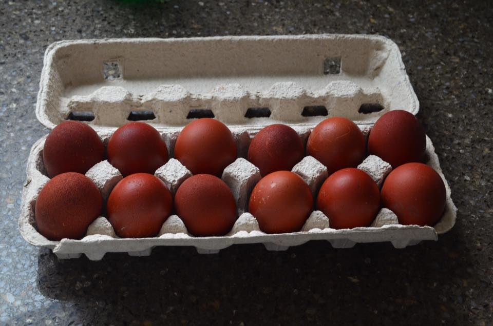 https://0901.nccdn.net/4_2/000/000/064/d40/my-eggs-from-deb-lockwood.jpg