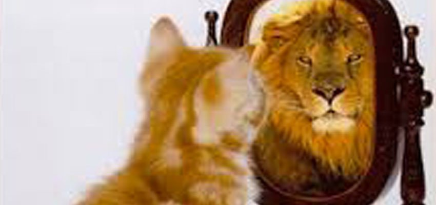 Cat and Lion