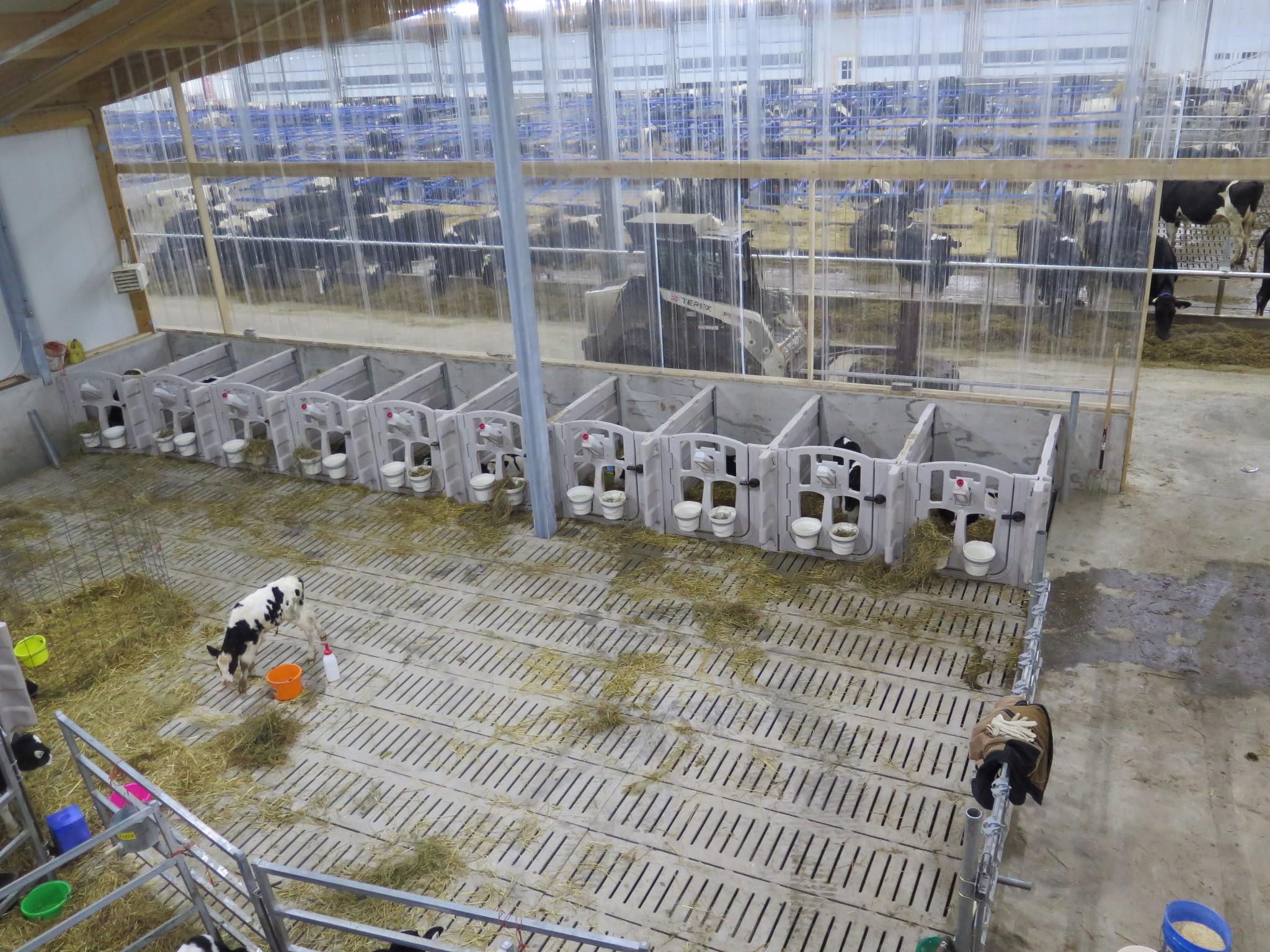 2016 Manitoba - Robot dairy barn