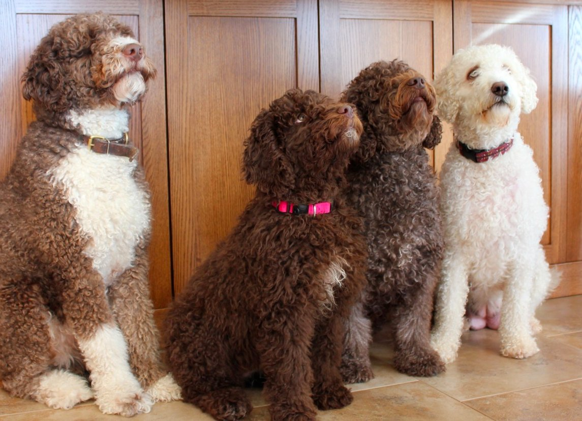 Ted, Ellie, Bonny, Coco