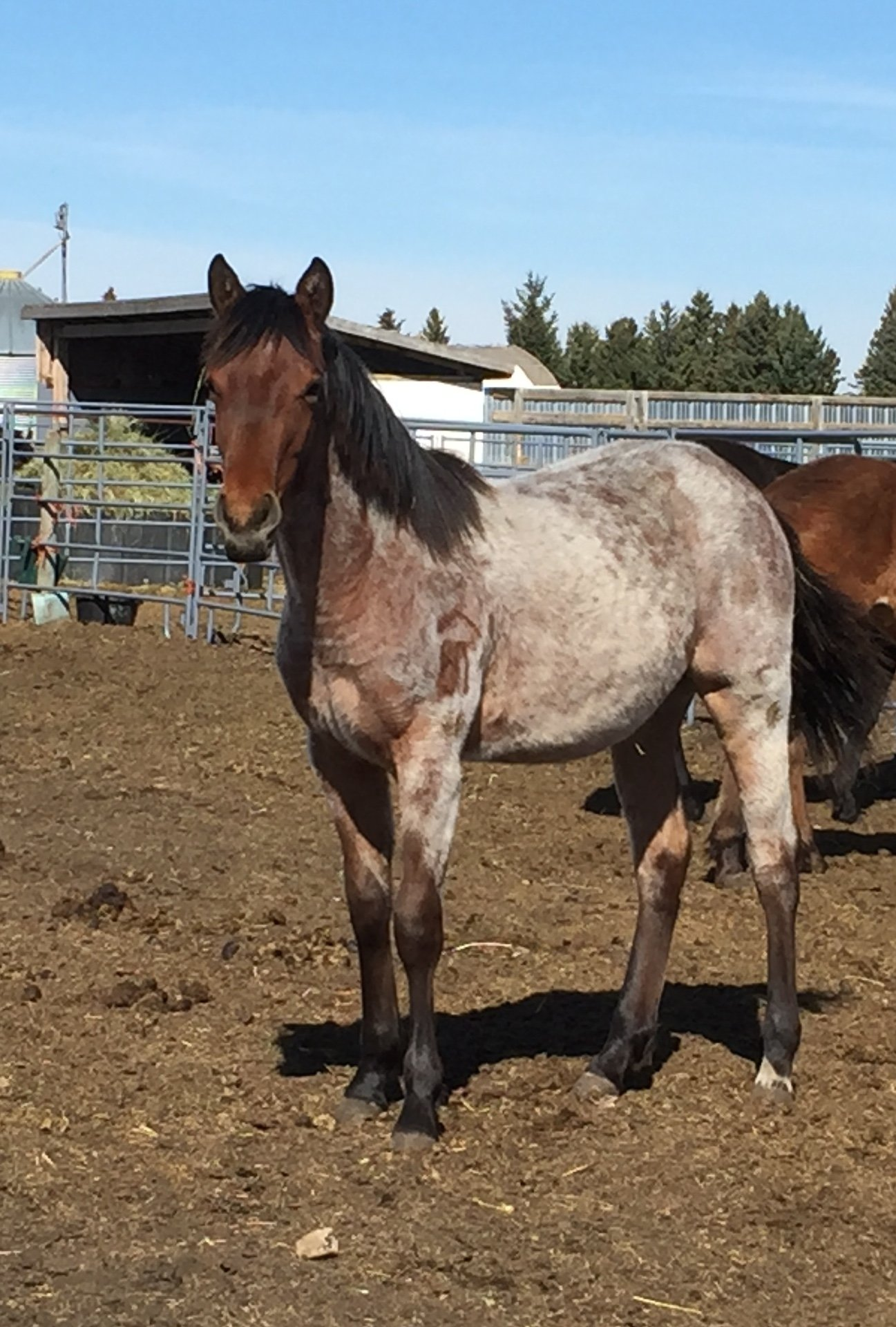 FLIRT - 2020 quarter horse filly
