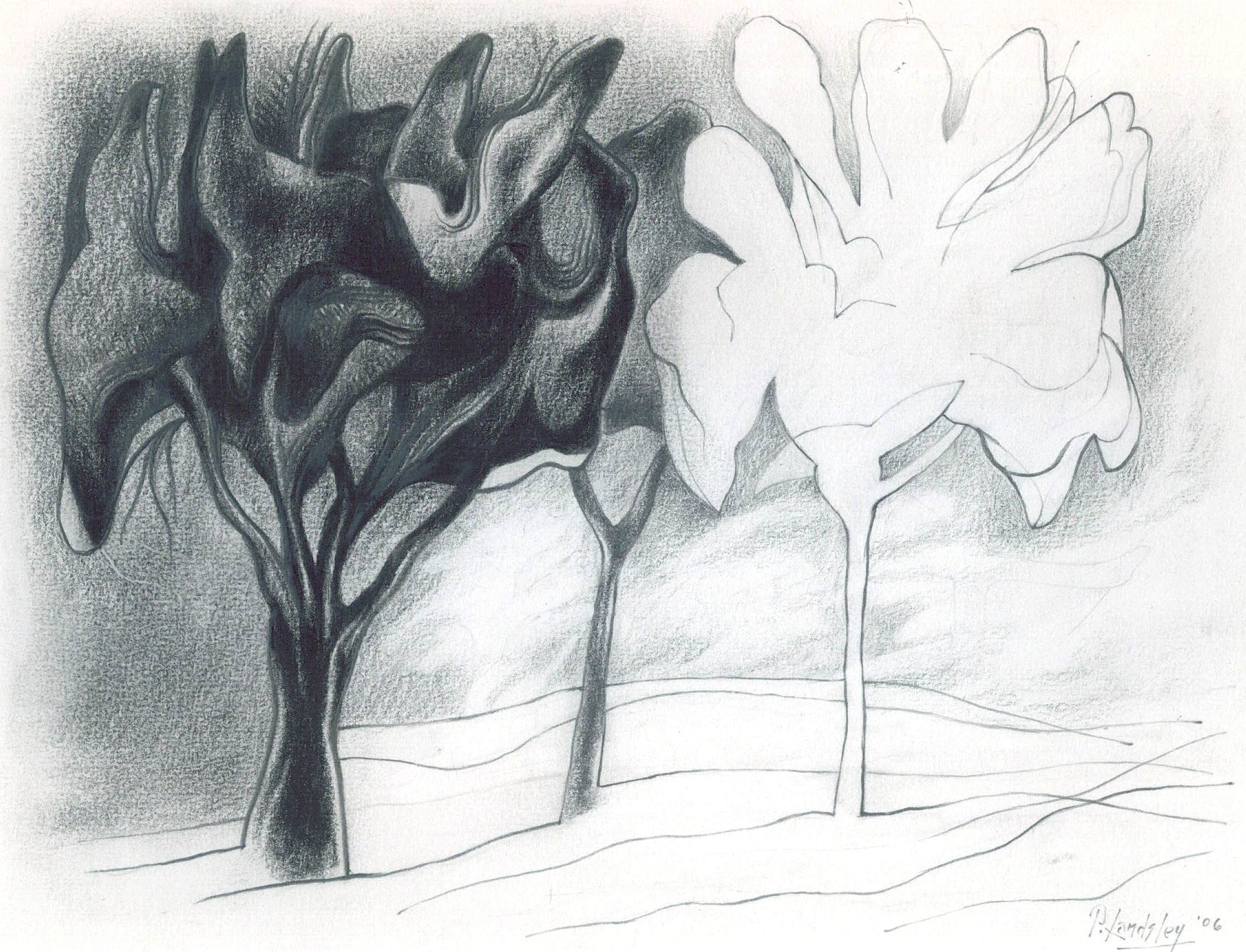 Tree in a Park, graphite on paper