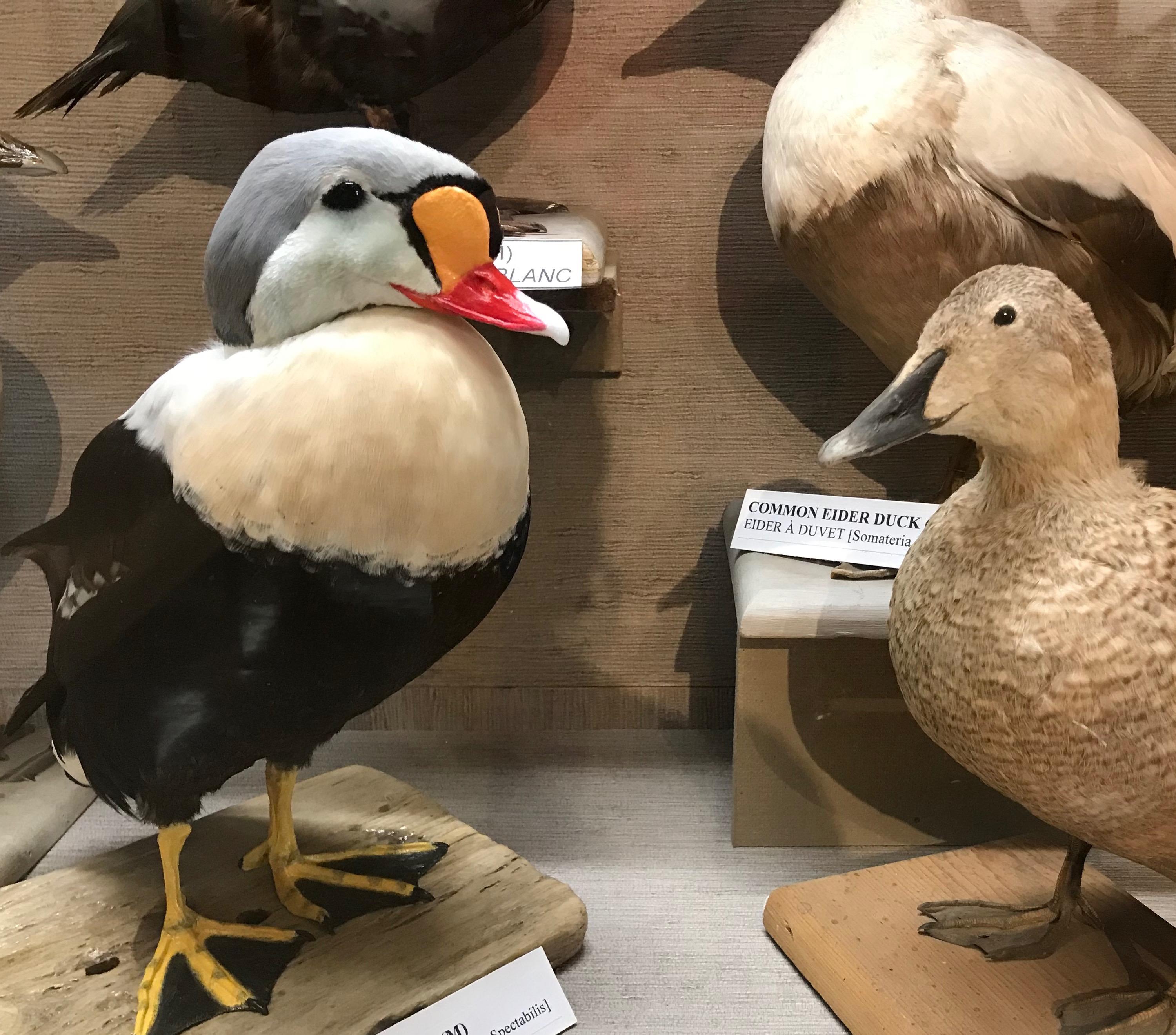 https://0901.nccdn.net/4_2/000/000/06c/bba/3-permanent-exhibits-main-level-1st-link-allan-moses-bird-galler.jpg