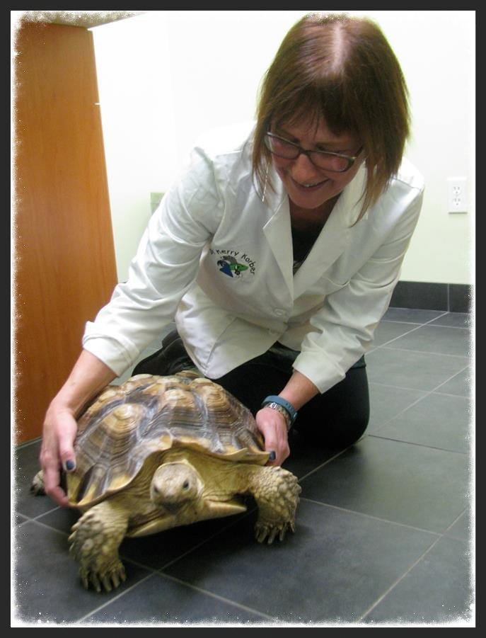 Dr. Korber and tortoise