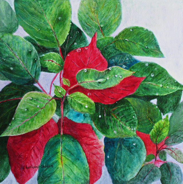 "Pointsettia acrylique 10"" x 10"""