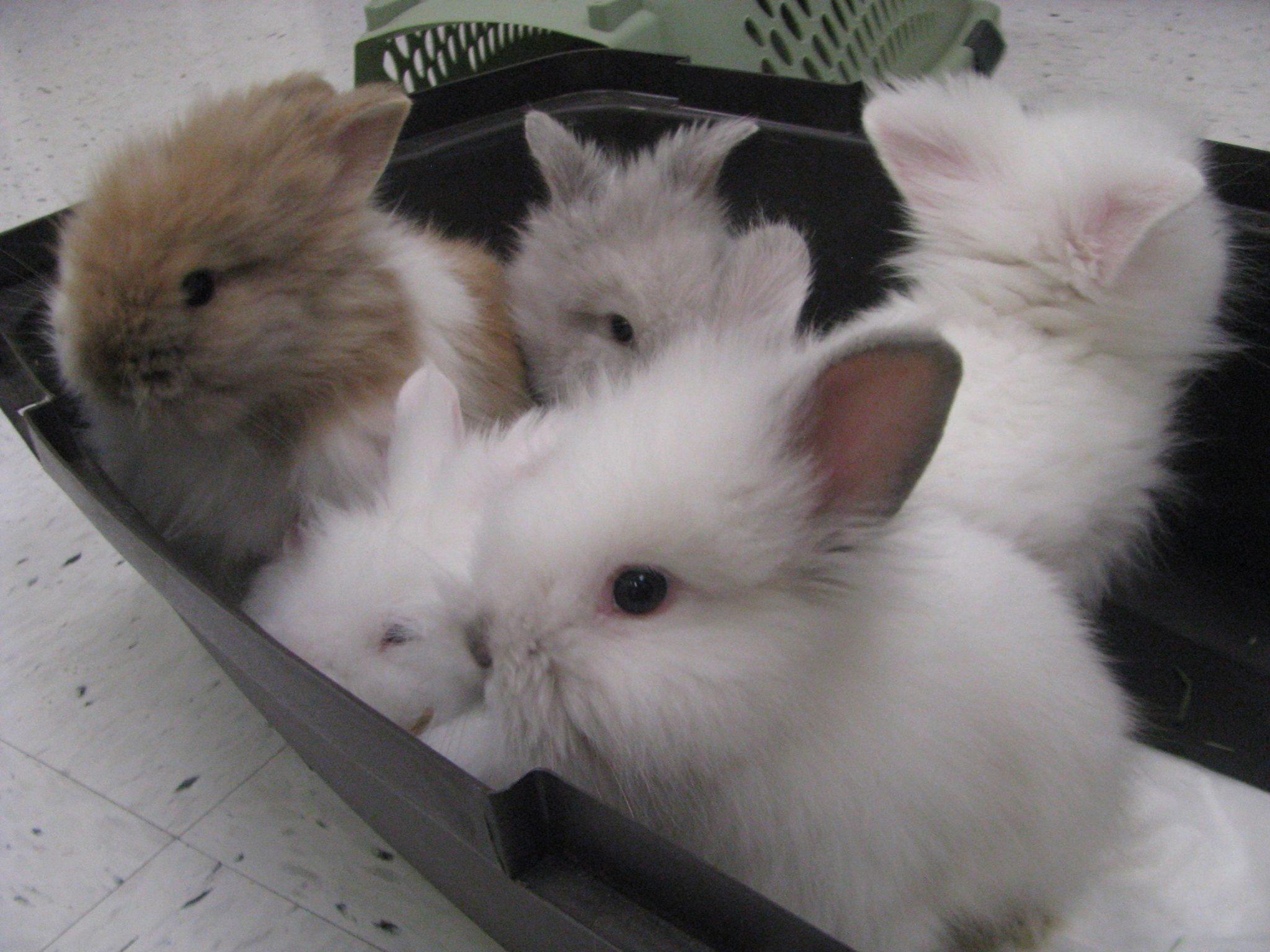 https://0901.nccdn.net/4_2/000/000/071/260/baby-bunnies-2048x1536.jpg