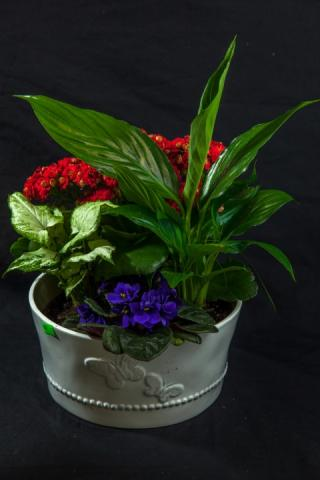 https://0901.nccdn.net/4_2/000/000/071/260/lcp-butterfly-planter-apr28-2020-4560.jpg