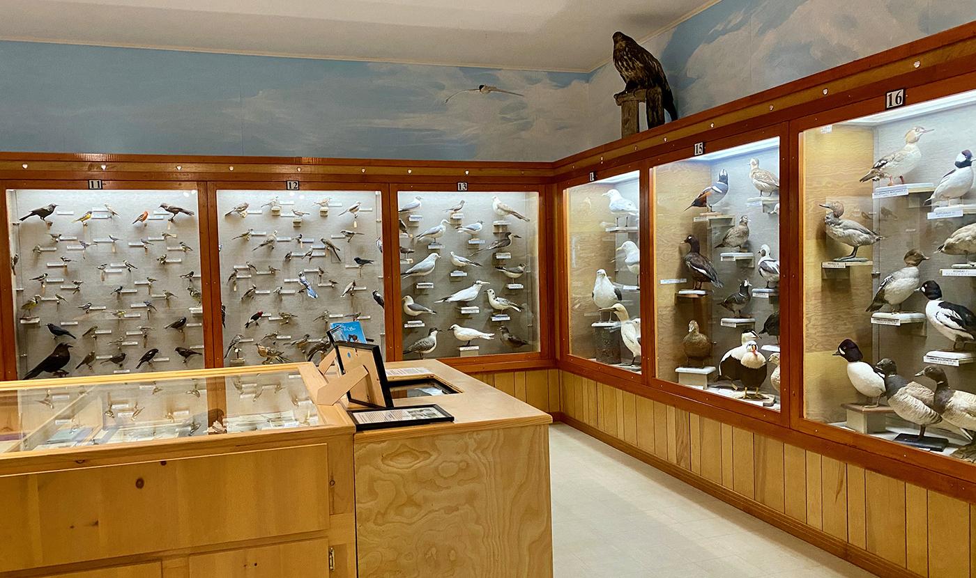 https://0901.nccdn.net/4_2/000/000/076/de9/3-permanent-exhibits-main-level-1st-link-allan-moses-bird-galler.jpg