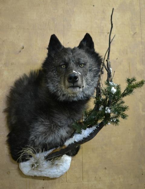 https://0901.nccdn.net/4_2/000/000/076/de9/Animals-Clar-Pic-2017-3--2--480x626.jpg