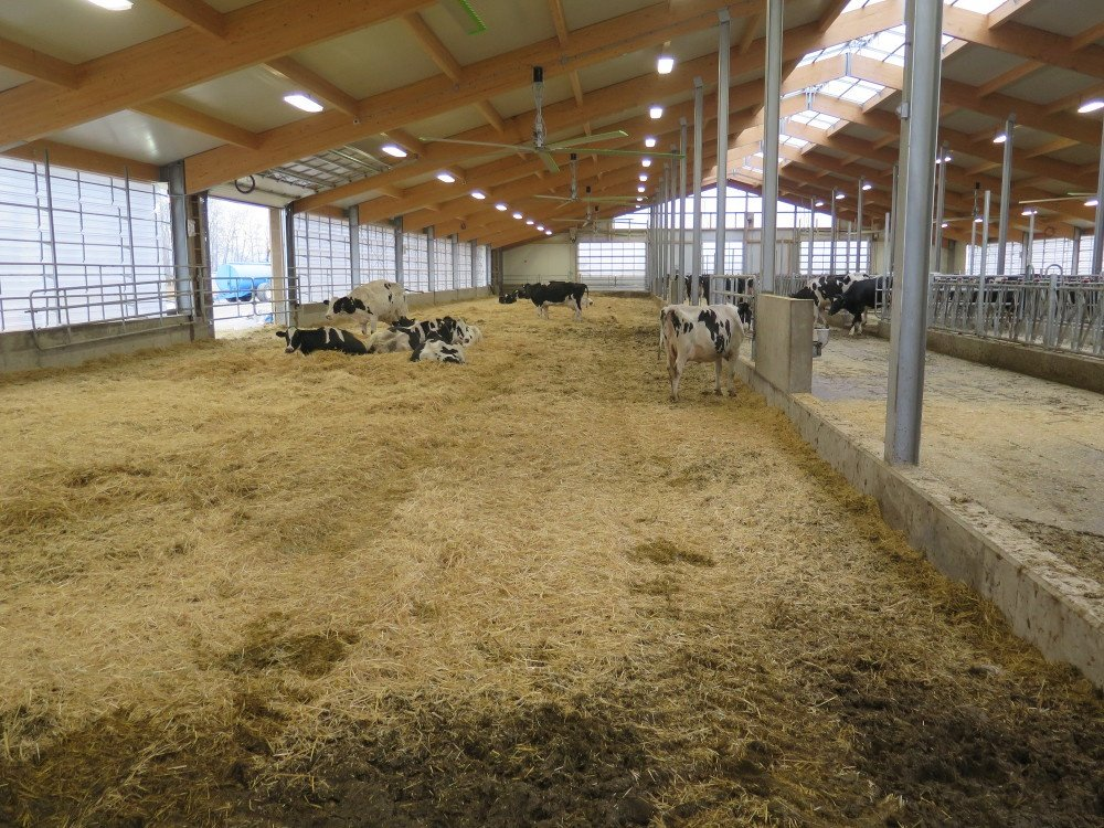 2017 - Manitoba - Dairy barn
