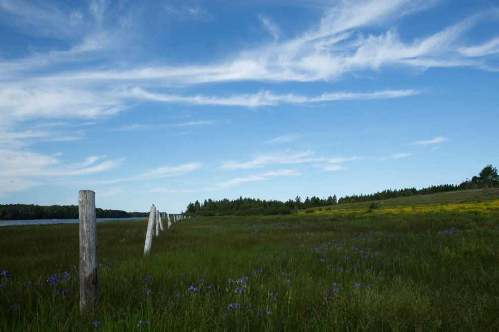 Richibucto River - a natural waterfront wildflower paradise