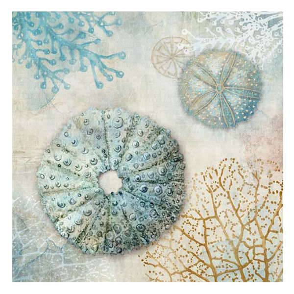 Sand Dollars & Sea Urchins
