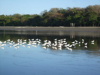 https://0901.nccdn.net/4_2/000/000/07a/dbb/Costa_Rica-_Matepalo-_2009_141-320x240.jpg