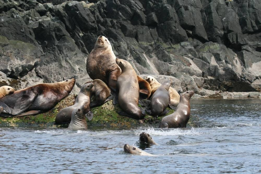 https://0901.nccdn.net/4_2/000/000/07a/dbb/sealions-in-Lund-BC-1000x667.jpg
