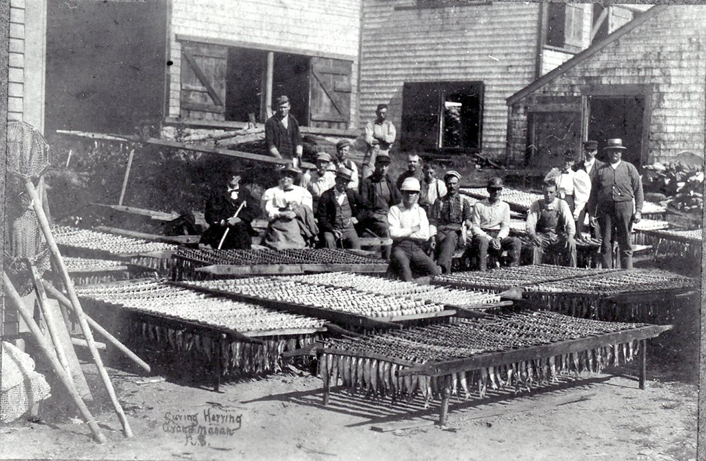 Smoked Herring Industry in late 19th Century