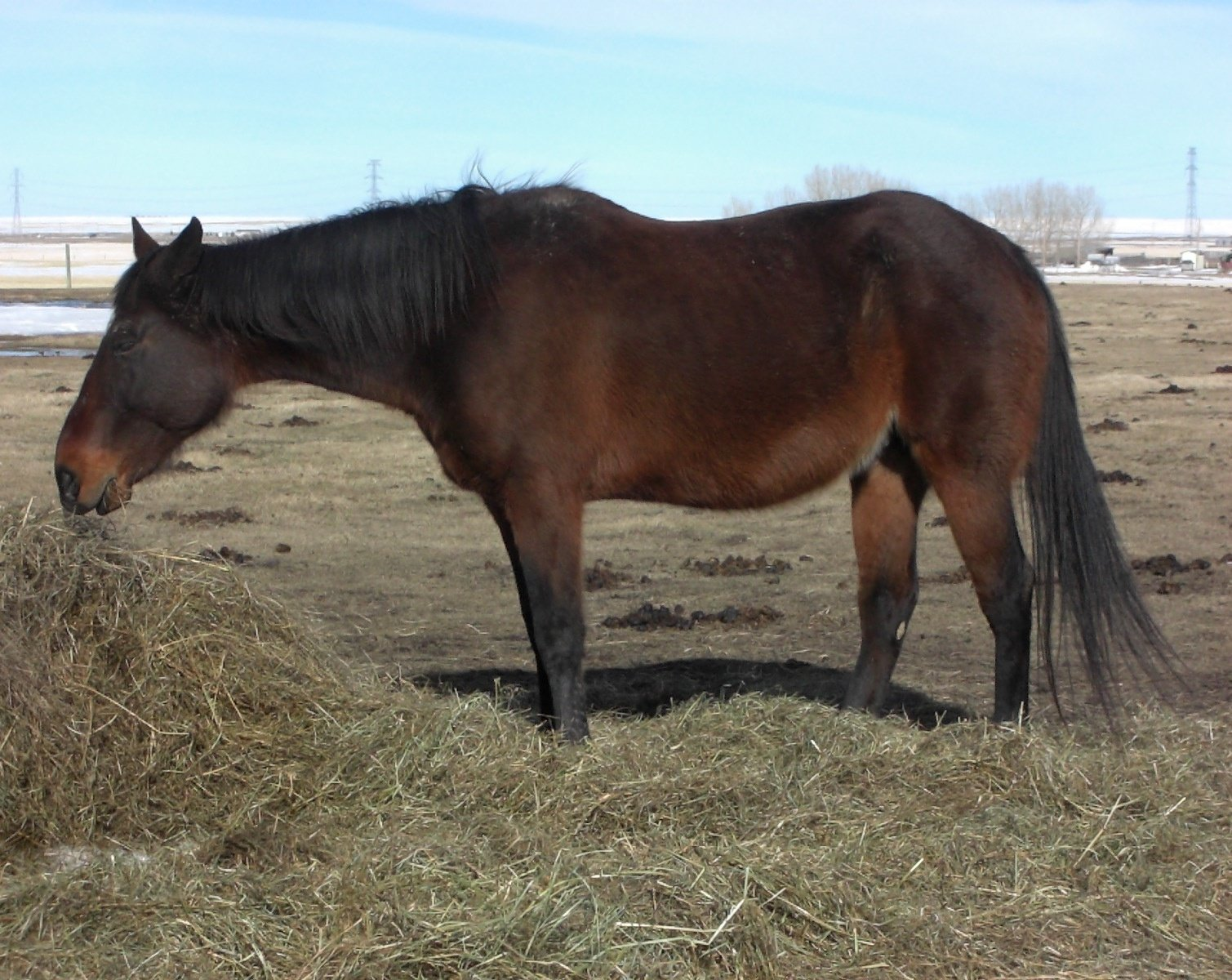 ANNIE - April 2016. Annie was raced and then used as a broodmare for years. It took a toll on her body, and at 19 yrs old, her body started shutting down. Her owner made the hard decision to have her put to sleep.