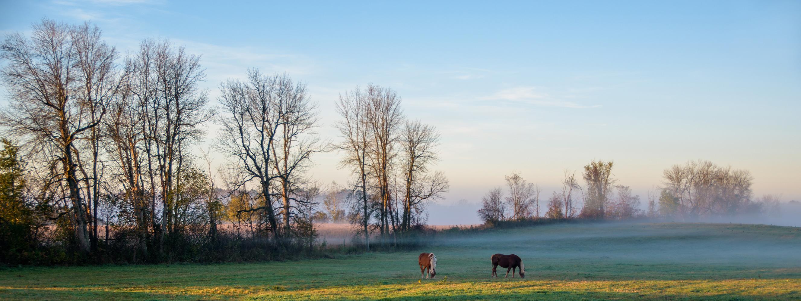 https://0901.nccdn.net/4_2/000/000/07d/95b/landscape-horses-grazing.jpg