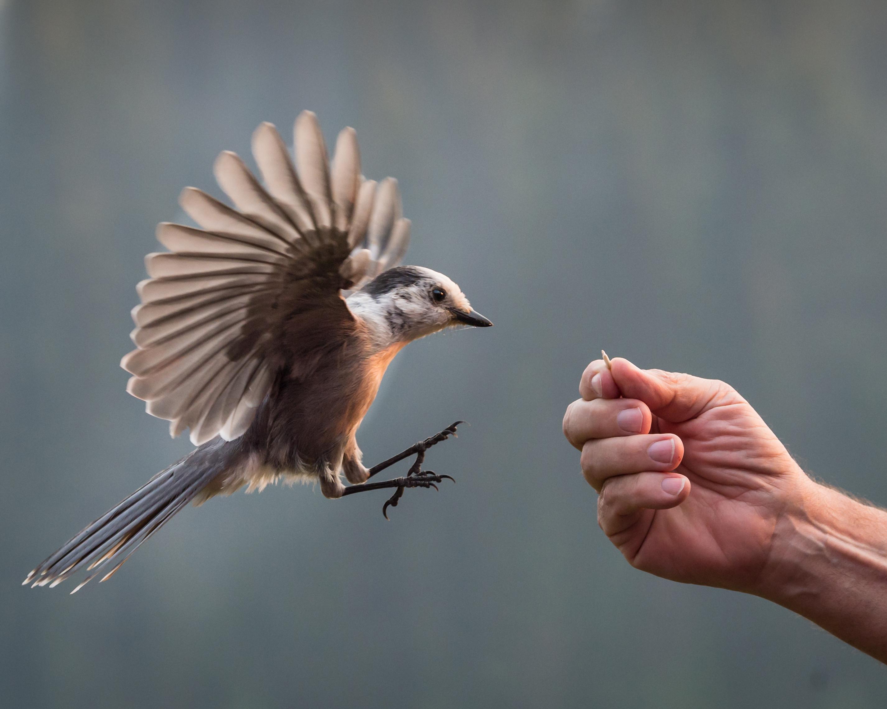 https://0901.nccdn.net/4_2/000/000/07f/5ee/wildlife_01.jpg