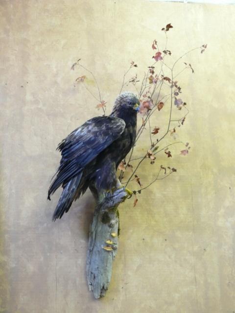 https://0901.nccdn.net/4_2/000/000/084/3b1/Bird-bluegrey-web-2011-13--3--480x640.jpg