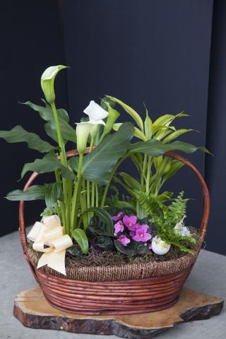 https://0901.nccdn.net/4_2/000/000/084/929/0a_port_alberni-flower_shop_azalea-9430.jpg