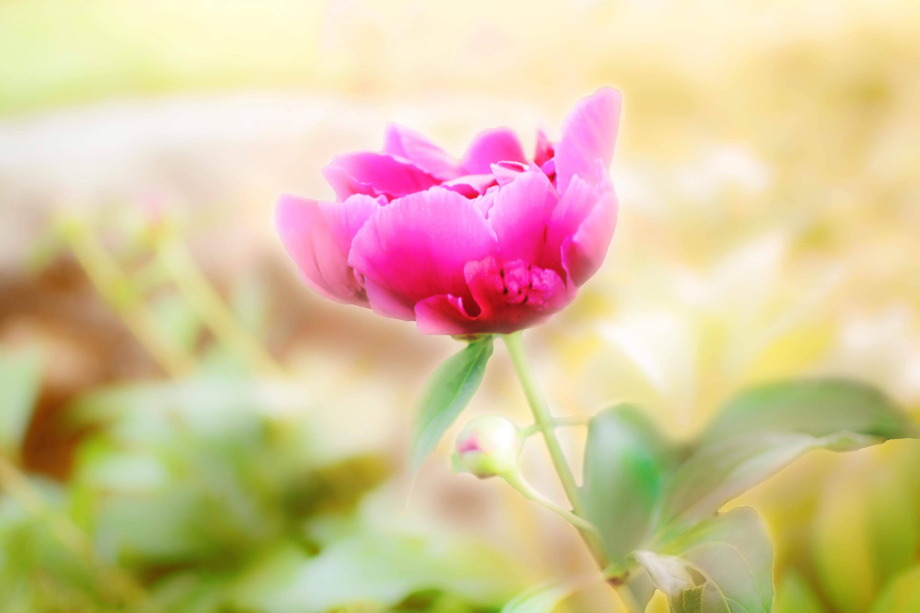 https://0901.nccdn.net/4_2/000/000/086/26f/zen-garden-2b-8x12.jpg