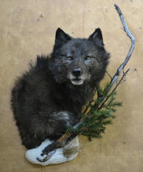 https://0901.nccdn.net/4_2/000/000/086/7eb/Animals-Clar-Pic-2017-7--2--480x579.jpg
