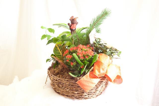 https://0901.nccdn.net/4_2/000/000/086/b99/planter_baskets_port_alberni_z.jpg