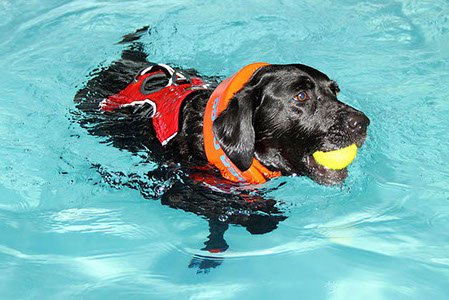 Five Valleys Canine Hydrotherapy Centre, Gloucestershire