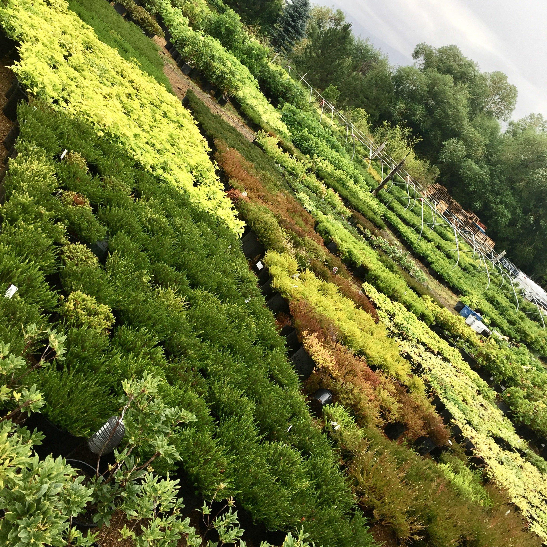 Perennial fields