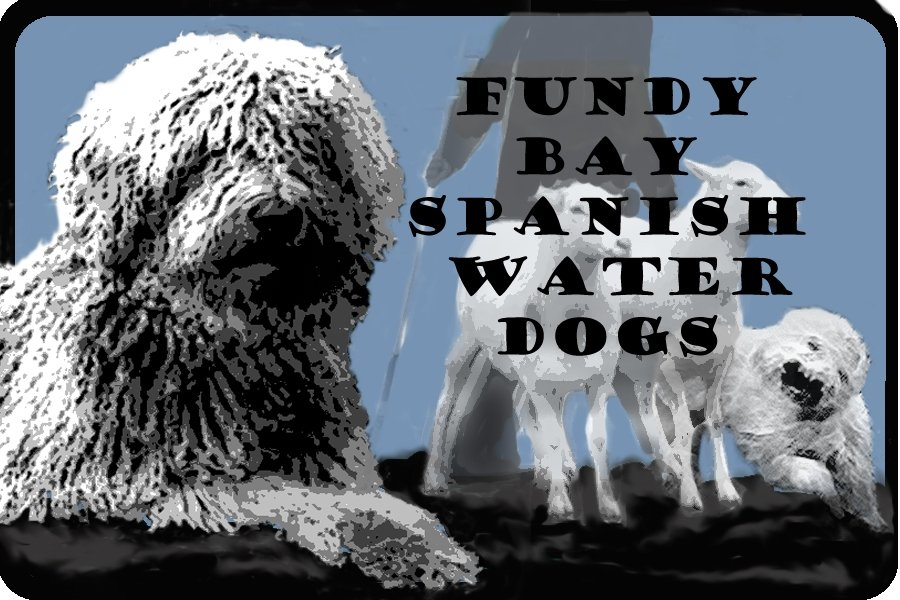 Fundy Bay Spanish Water Dogs