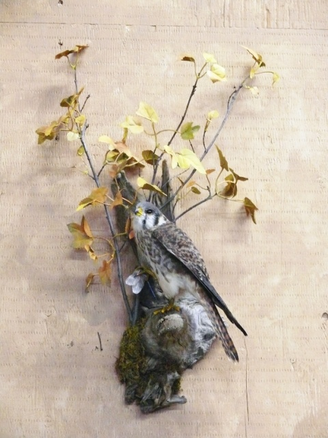 https://0901.nccdn.net/4_2/000/000/088/334/Bird-greyish-web-2011-01--3--480x640.jpg