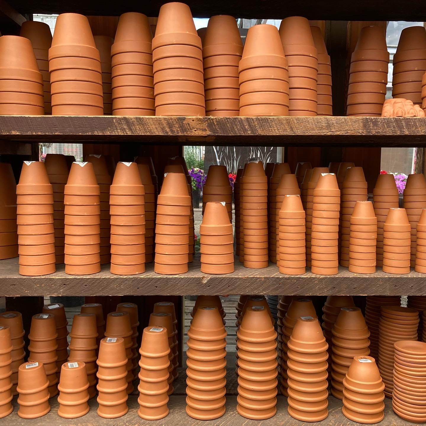 Large selection of terra cotta