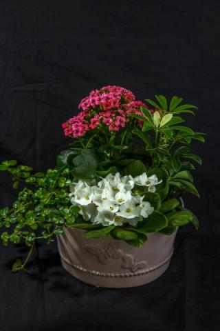 https://0901.nccdn.net/4_2/000/000/08b/23e/lcp-butterfly-planter-apr28-2020-4570.jpg